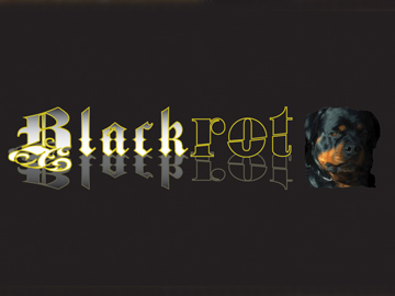 Design & Branding for Blackrot